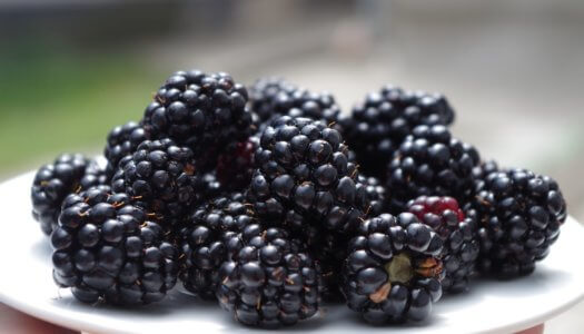 Are Blackberries Good For My Dog?
