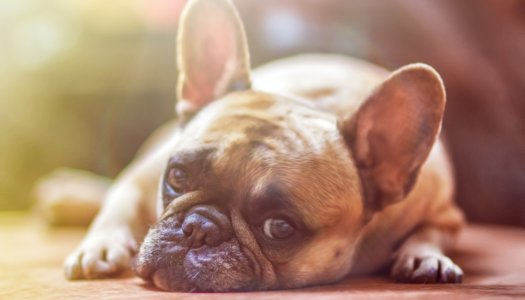 5 Telltale Signs That Your Dog Is In Pain