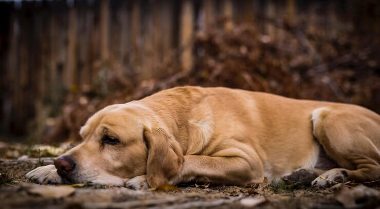 5 Signs Of Puppy Hip Dysplasia And How To Effectively Manage The