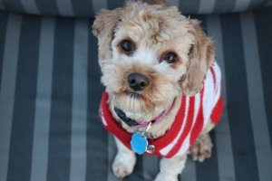 Rescue Spotlight The Lucky Puppy Rescue Pawstruck Press