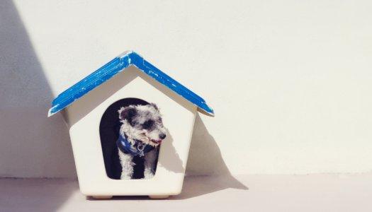 Rescue Spotlight: The Lucky Puppy Rescue
