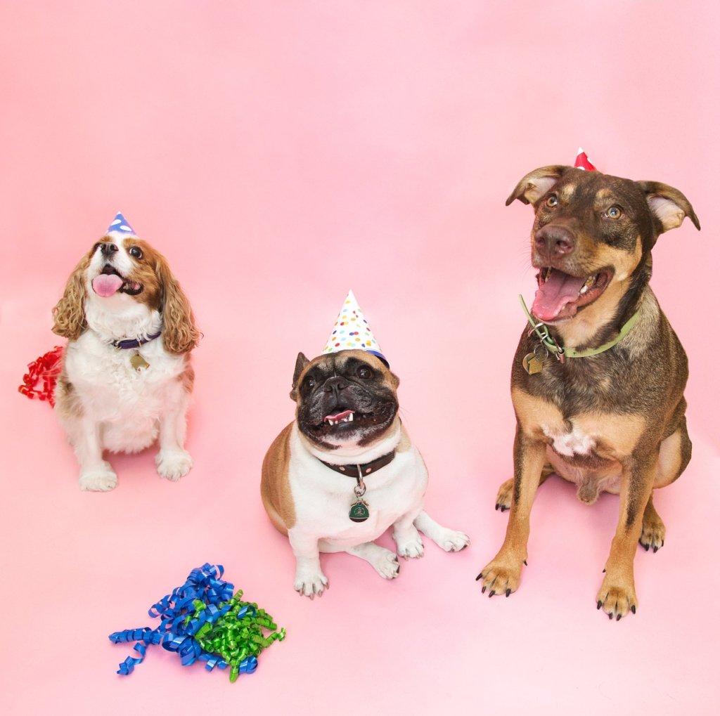 Admirable Help How Do I Make A Birthday Cake For My Dog Pawstruck Press Personalised Birthday Cards Akebfashionlily Jamesorg
