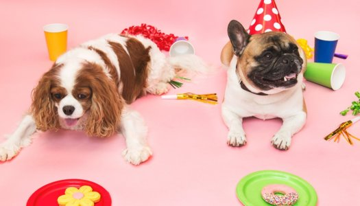 How to Throw An Awesome Dog Party & Make The Neighborhood Pack Jealous!