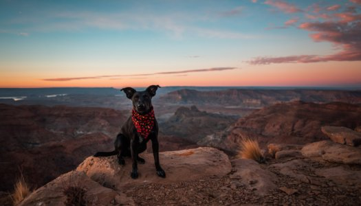 Pet Friendly Travel: What To Do With Your Dog In Each State