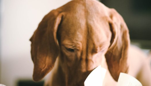 CAN HAVING A DOG HELP YOU GET BETTER GRADES?