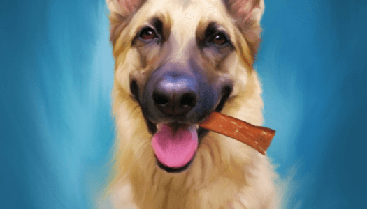 Pet Of The Month: October