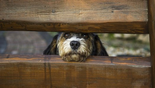 A Dog Lover's Guide to Helping Out At Animal Shelters
