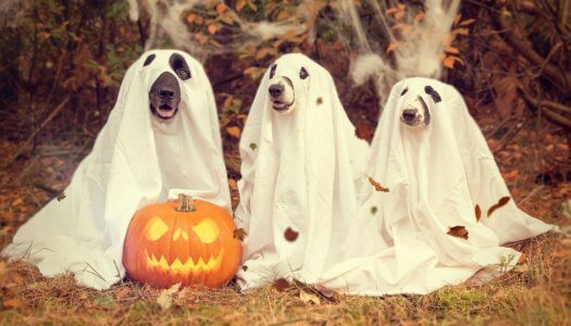 The Nitty-Gritty of Keeping Your Dogs Safe on Halloween
