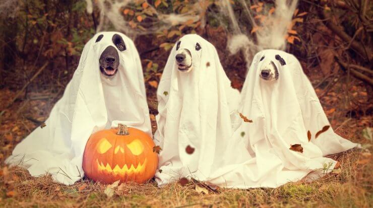 The Nitty-Gritty of Keeping Your Dogs Safe on Halloween - Pawstruck ...