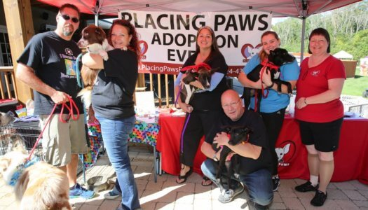 Rescue Spotlight: Placing Paws of Illinois