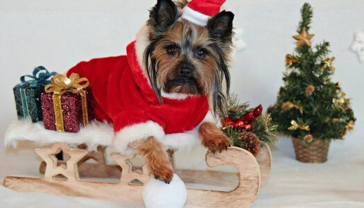 15 Little-Known Dangers to Pets During the Holidays