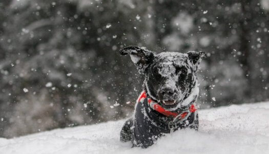Keeping Your Dog Safe and Warm During Winter