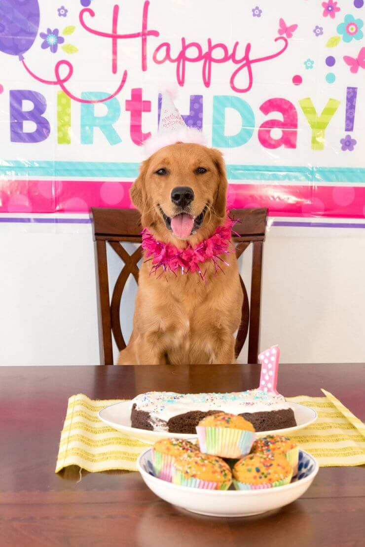 How Do I Make A Birthday Cake For My Dog