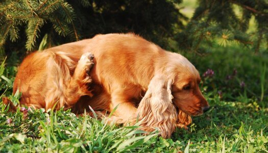 You Won't Believe What Causes Dry Skin in Dogs!