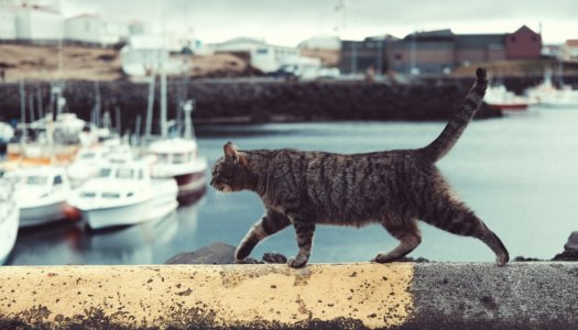 Pawstruck Loves Cats