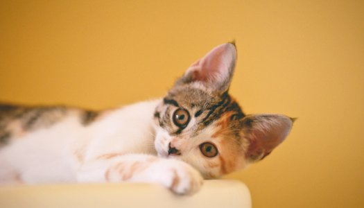 Expert Tips for Introducing a New Cat into Your Home