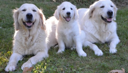 5 Facts You Probably Didn't Know About Guide Dogs