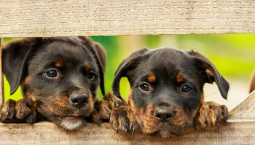 You Name It! 2018's Most Popular Dog Names