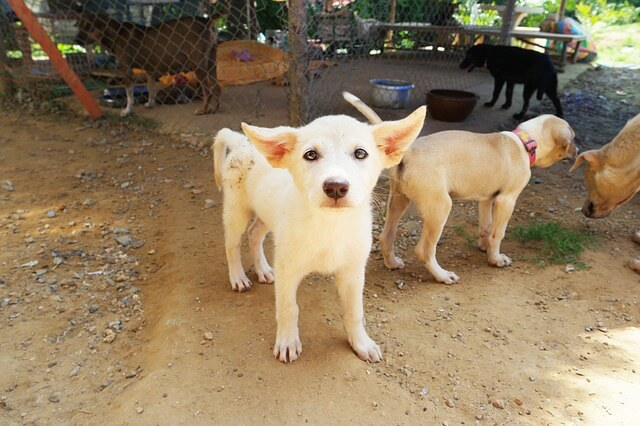 white small puppy for adoption