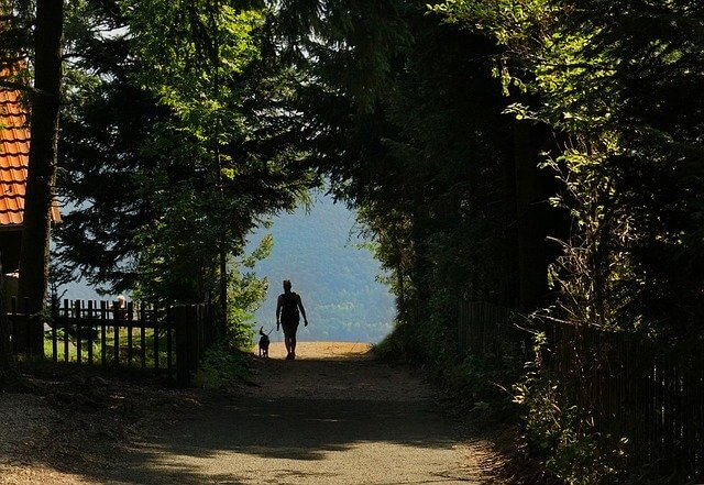 Person walking a dog in shady area