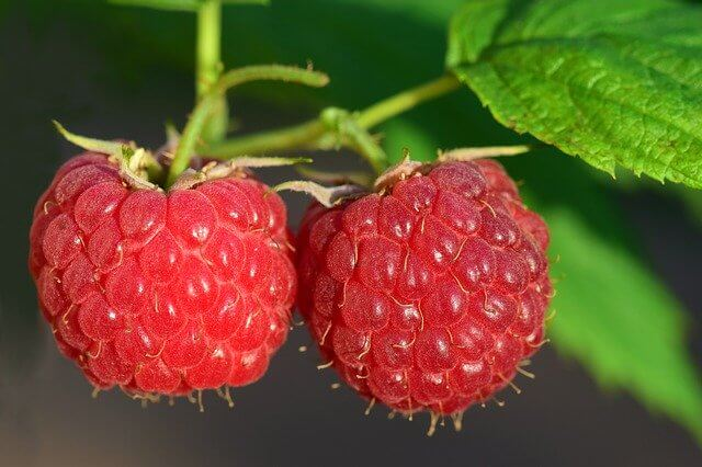 Raspberry Summer Fruits for Dogs