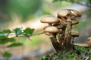 Wild mushrooms list of poisonous plants for dogs