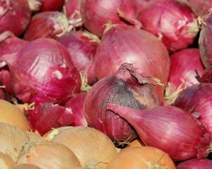 toxic plants for dogs onions and shallots